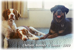 Chelsea, Banner & Chara in 1989
